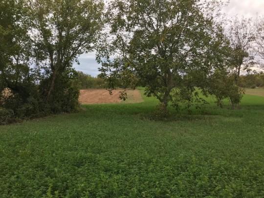 Balatonkenese, fejlesztési- és mezőgazdasági terület eladó 1